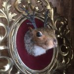 K.P. Matt, Squirrel-A-Lope, taxidermy on vintage frame