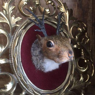 K.P. Matt, Squirrel-A-Lope, taxidermy on vintage frame
