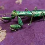Praying Mantis Pin