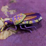 Purple Beetle Pin