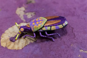 Purple Beetle Pin