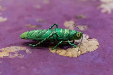Grasshopper Pin